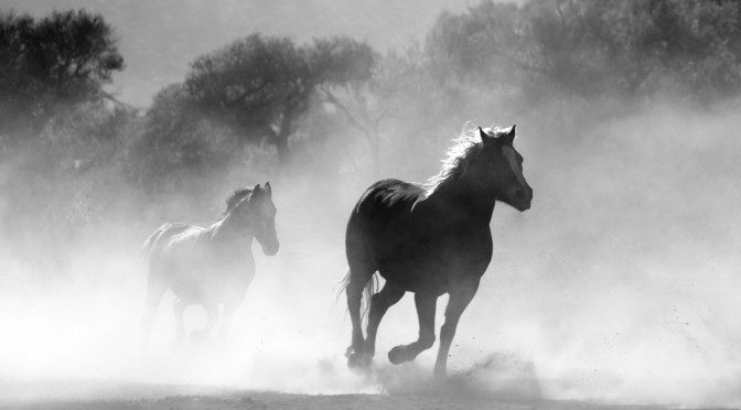 Pferde durch den Nebel stürmend – Horses almost blindly storming through fog