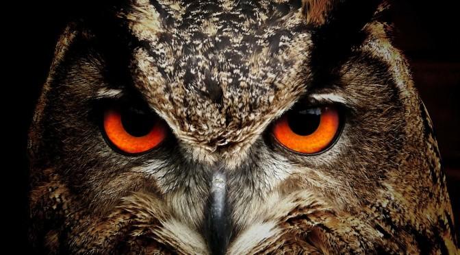 An owl as a metaphor for self perception