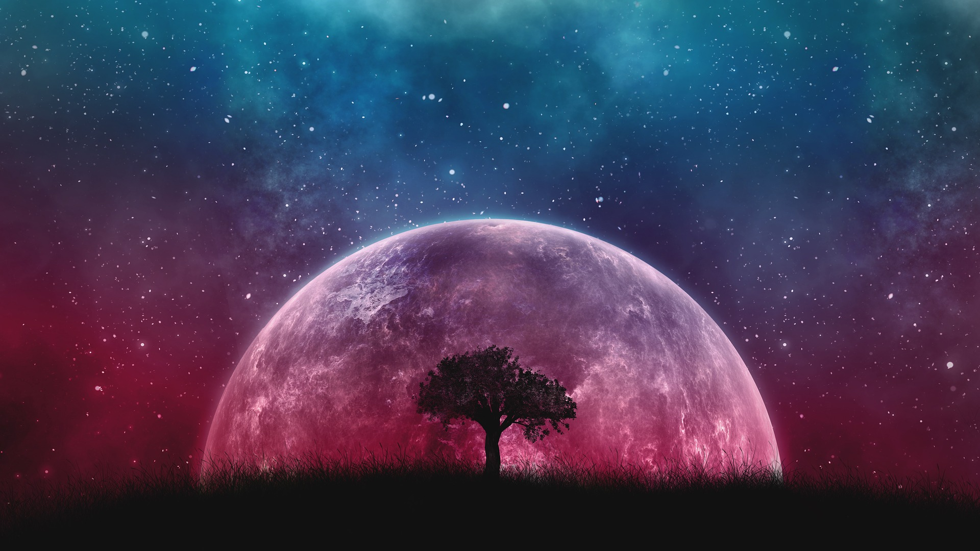 A tree, the moon, the universe